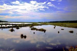 Scarborough Salt Marsh