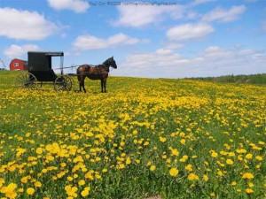 Maine Amish Farm