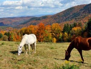 Maine Horsback Riding