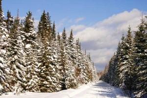Northern Maine Snowmobile Trail