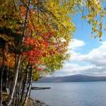Fall Birches - Rangeley Lake